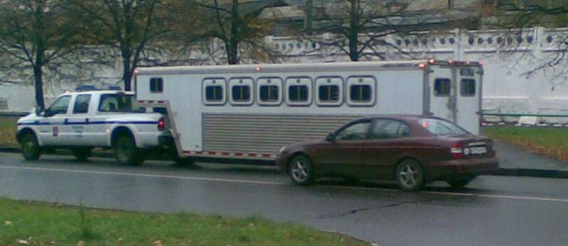 Полуприцеп коневоз